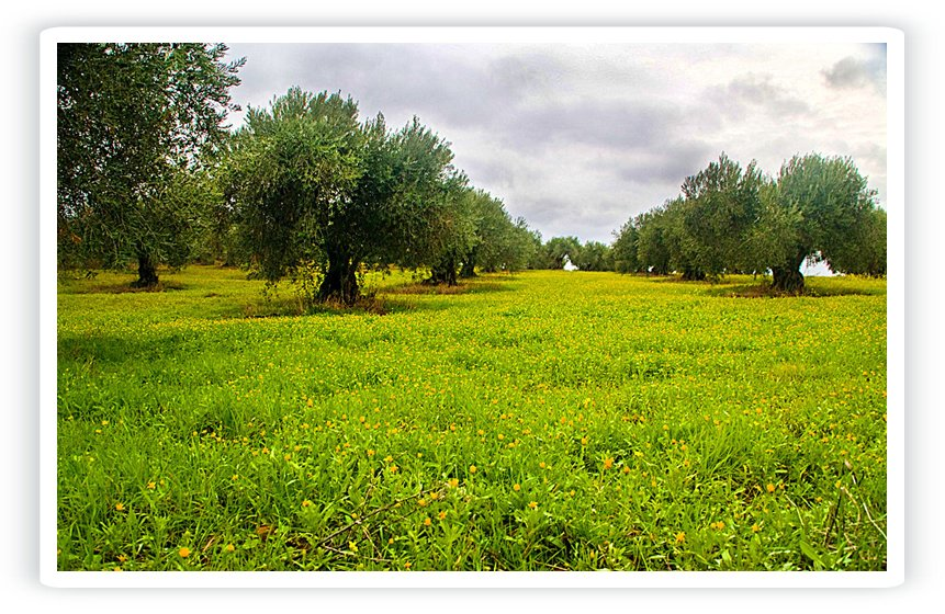 Tratamiento del alperujo - Aguas residuales del aceite de oliva