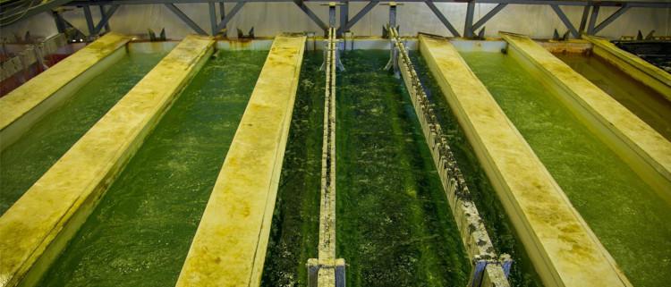 Pickiling bath wastewater treatment