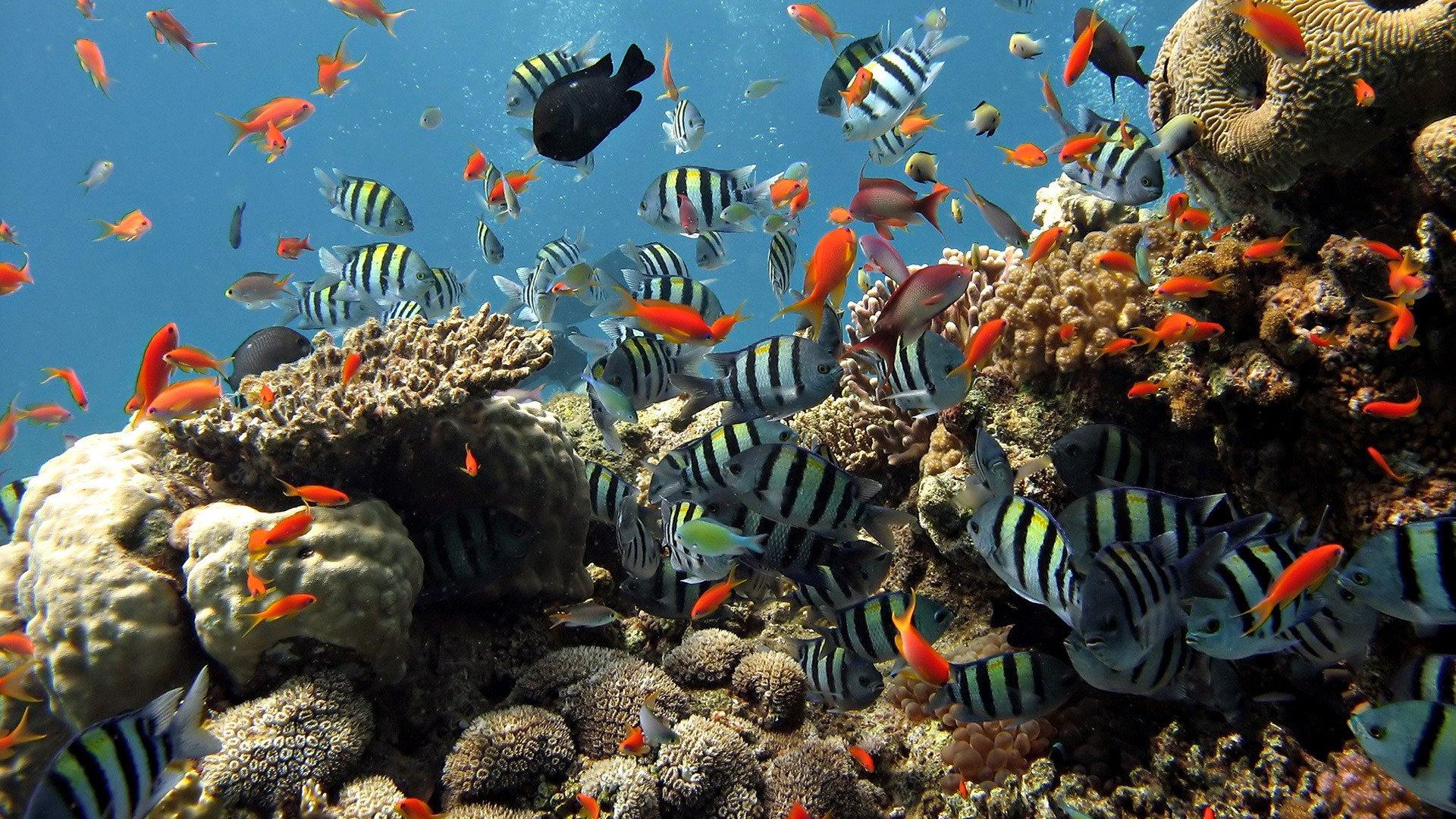 conservación de los oceanos