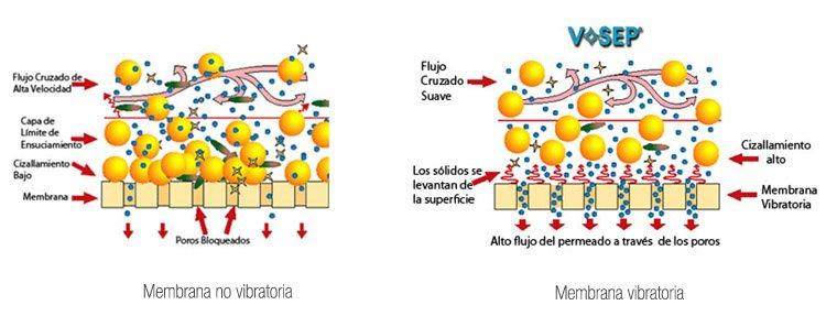 Membrana vibratoria