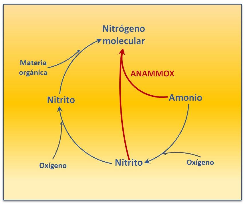 Conversión del amonio en nitrógen